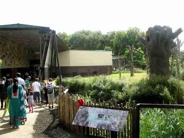 widok na pawilon goryli