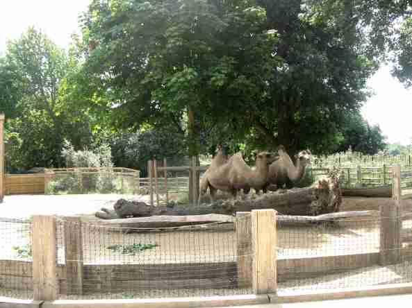 Zoo Londyn, sierpień 2013 251