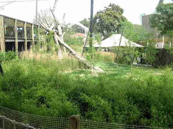 Zoo Londyn, sierpień 2013 253
