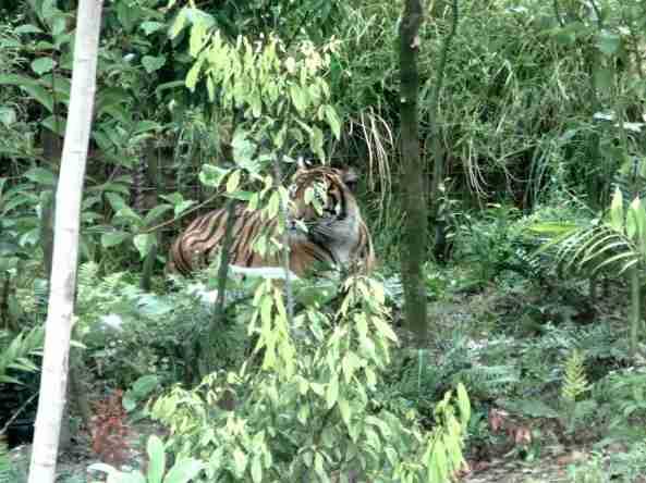 Zoo Londyn, sierpień 2013 255