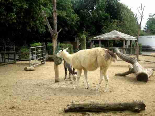 Zoo Londyn, sierpień 2013 282