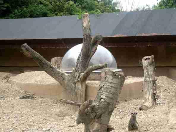 Zoo Londyn, sierpień 2013 284