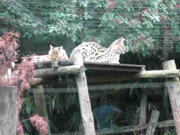 Zoo Londyn, sierpień 2013 392