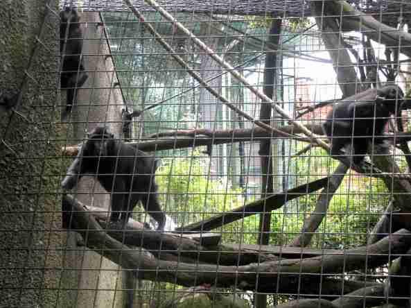 Zoo Londyn, sierpień 2013 396