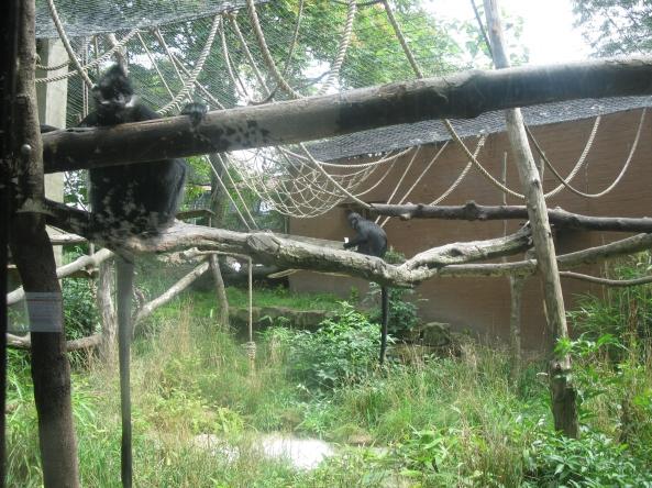 Zoo Londyn, sierpień 2013 423