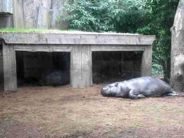 Zoo Londyn, sierpień 2013 426