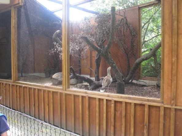 Zoo Londyn, sierpień 2013 432