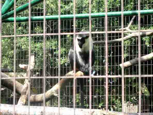Zoo Londyn, sierpień 2013 476