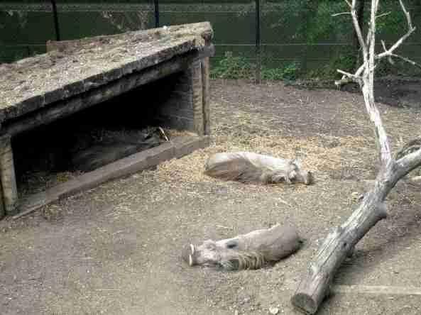 Zoo Londyn, sierpień 2013 499