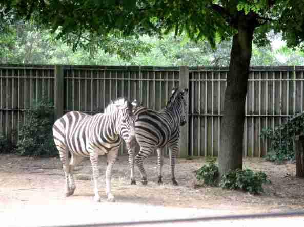Zoo Londyn, sierpień 2013 517