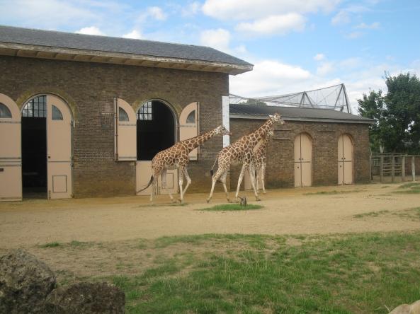 Zoo Londyn, sierpień 2013 518