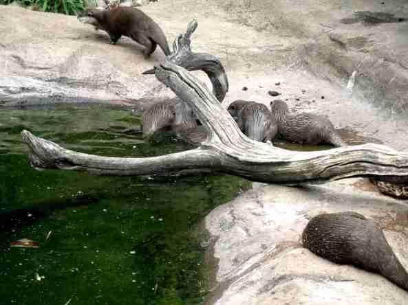 Zoo Londyn, sierpień 2013 563