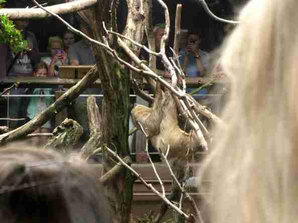 Zoo Londyn, sierpień 2013 575