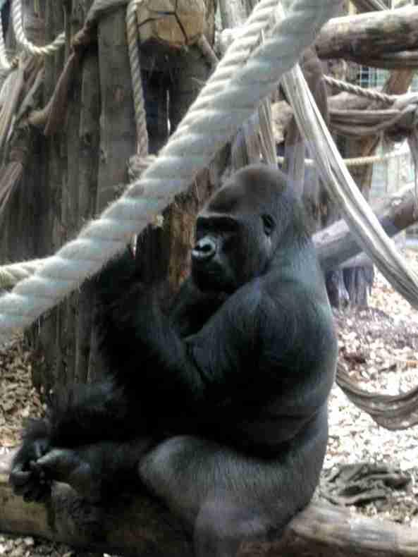 Zoo Londyn, sierpień 2013 627