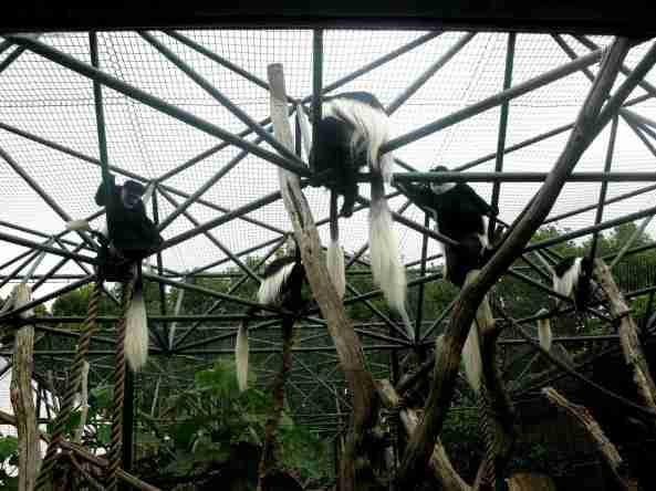 Zoo Londyn, sierpień 2013 630