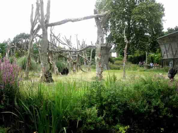 Zoo Londyn, sierpień 2013 639