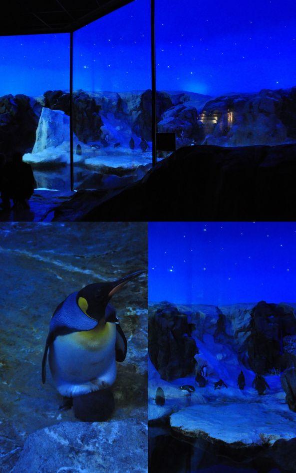 20 pingwiny