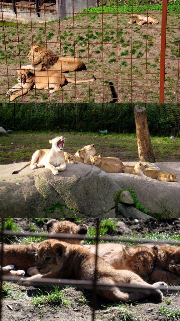 7 lwy