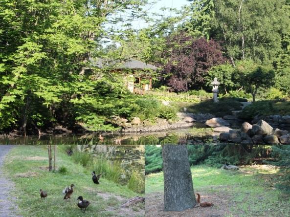 ogród japo