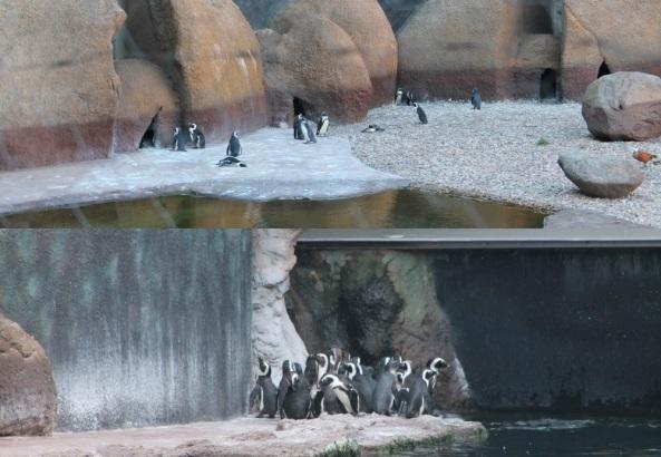 Pingwiny widziane z zewnątrz