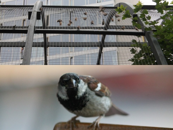 dzikie ptasiory1